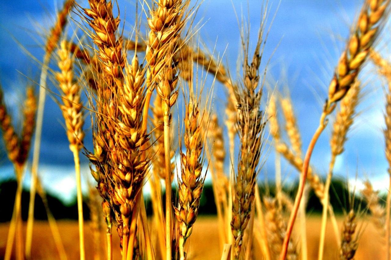 Frodi-in-agricoltura-2013-1280x853.jpg